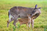 В Госдуме открылась фотовыставка «Материнство в дикой природе»