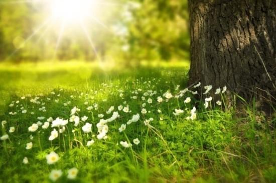 Весна в Ростов-на-Дону придёт только в апреле, считает эксперт