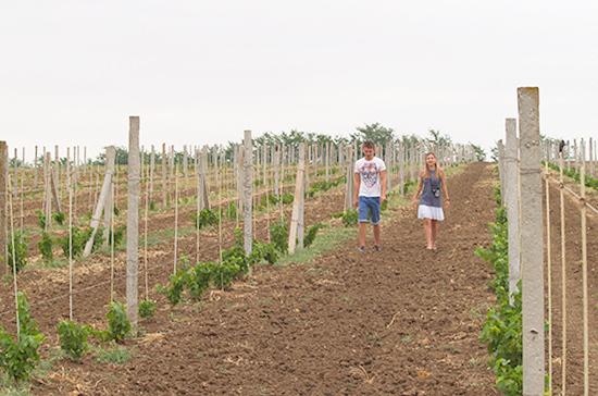 В Севастополе  в 2017 году произвели более 16 млн бутылок вина, в том числе игристого