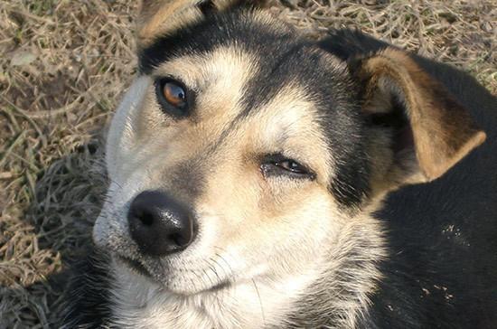 Совет Федерации одобрил закон о подготовке охотничьих собак
