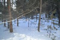 В Иркутской области охотник случайно застрелил своего знакомого