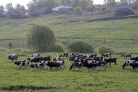 На Ставрополье власти выделят на развитие животноводства рекордные 1,5 млрд рублей
