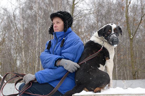 В России перестанут проводить тендеры на отстрел животных