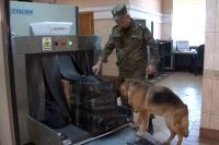 Таможенники аэропорта Владивостока задержали багаж с желчью медведя