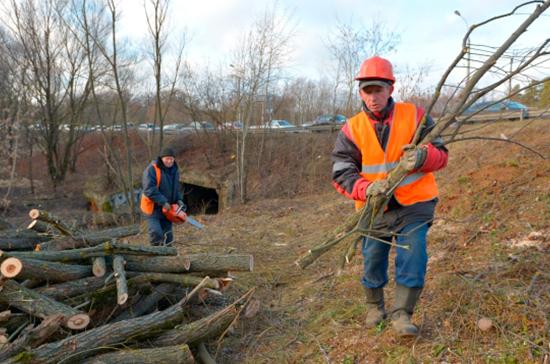 Бизнесменов отправят сажать лес