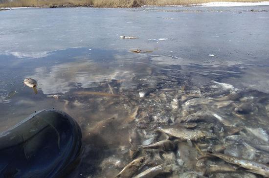 В челябинском озере всплывают тонны тухлой рыбы, выброшенной осенью