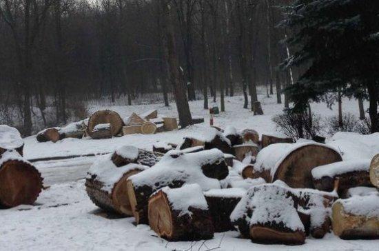Путин разрешил россиянам собирать валежник в лесу