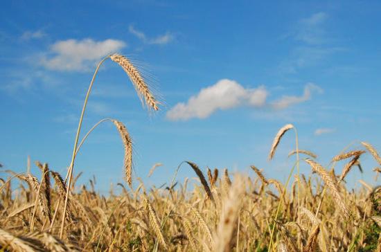 Экспорт зерновых вырос более чем на 42% в 2018 году, заявил Медведев