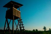 Законопроект о расширении прав лесников направят в Госдуму до конца весенней сессии