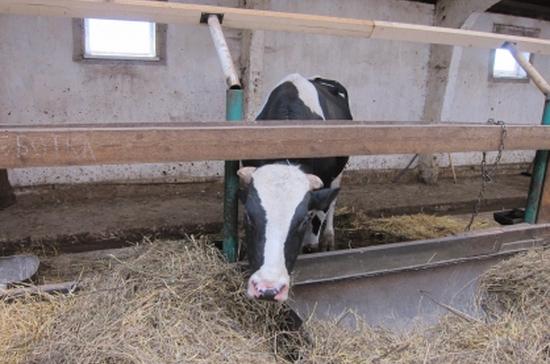 В Татарстане бык насмерть затоптал местного жителя
