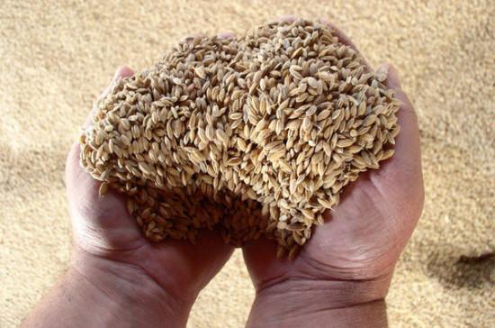 Минсельхоз: экспорт сельхозпродукции из РФ может составить 21-22 млрд долларов