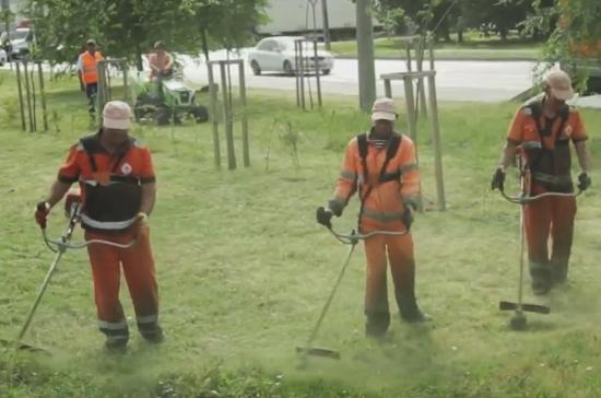 В Краснодарском крае начали выкашивать сорную траву