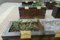 В Мичуринском парке на севере Петербурга открыли «Сад ощущений»