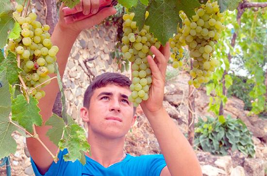На российском ТВ будут рекламировать вино из стран ЕАЭС