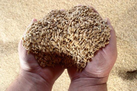 В пригороде Дамаска соберут 4 тонны урожая пшеницы, пишут СМИ