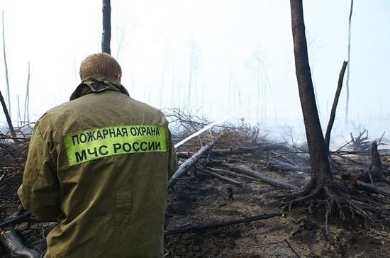 В России появится единый центр профилактики лесных пожаров