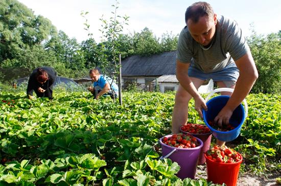 Фермеры и огородники получат больше прав в «земельном вопросе»