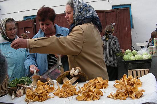 Как собирать грибы законно и безопасно