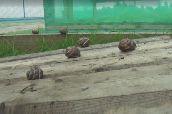 В Тверской области появилась ферма по разведению улиток