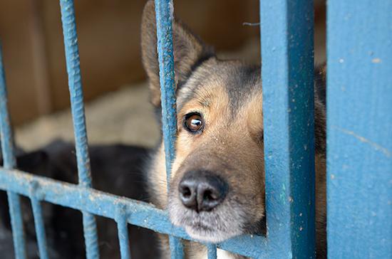 Иркутских должников отправили на исправительные работы в приют для животных