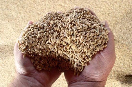 В Ростовской области могут собрать 10 млн тонн зерновых