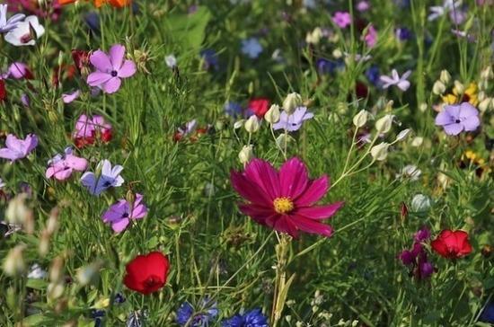 На фестивале «Цветы Подмосковья» высадят более 42 тысяч растений