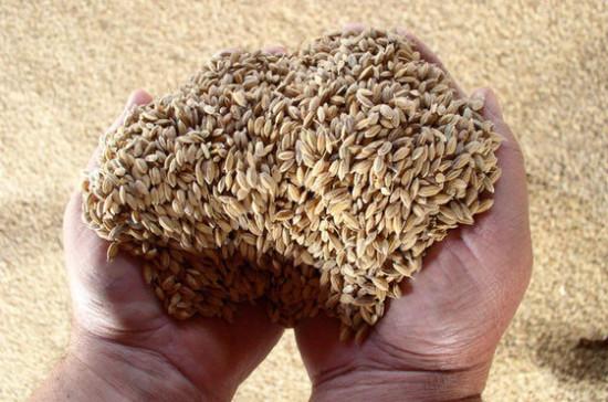 Правительство не планирует вводить экспортную пошлину на пшеницу