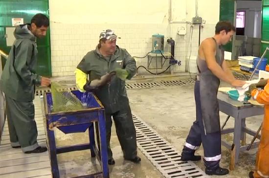 Рыбоводы в Сочи вывели уникальную породу форели