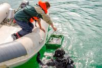 Как спасти от чёрных водолазов подводные сокровища России