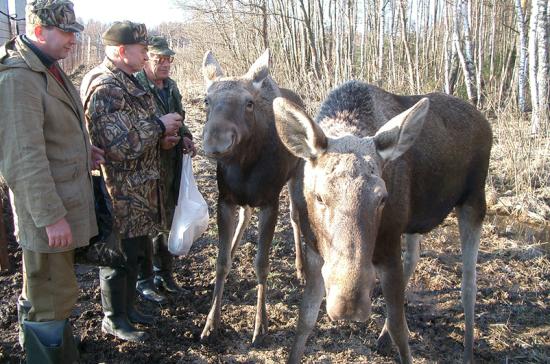 В России могут ввести госпошлину за выдачу охотничьего билета