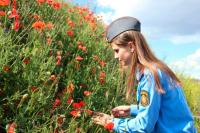 В России появятся легальные плантации опийного мака