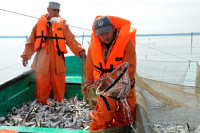 Кто заплатит за пойманную рыбу