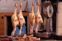 Россельхознадзор временно ограничит транзит в Казахстан мяса птицы из США