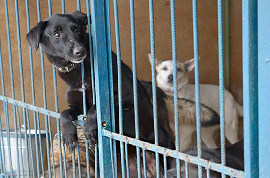 Бездомных животных предложили отпускать на волю после вакцинации и стерилизации