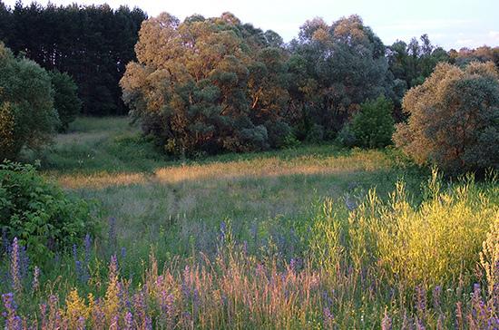 В Госдуме обсудят реализацию закона о лесной амнистии