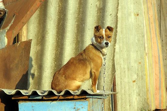 Законопроект об ответственном обращении с животными рассмотрят окончательно