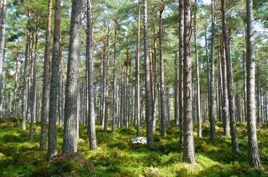 Для безвозмездного пользования лесными участками разрешили заключать типовые договоры