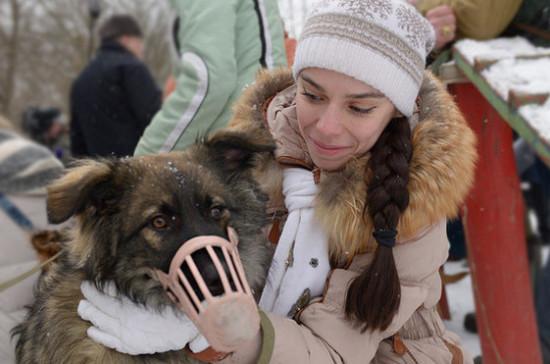 Совфед принял закон об ответственном обращении с животными