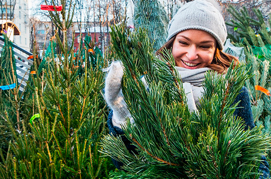 Как правильно избавиться от новогодней ёлки