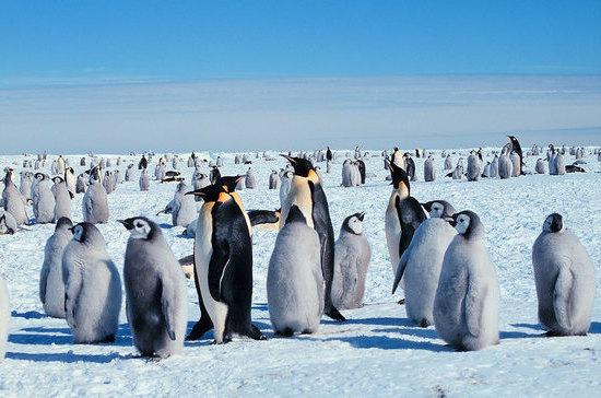 Антарктиду сочли бесполезной ещё до её официального открытия