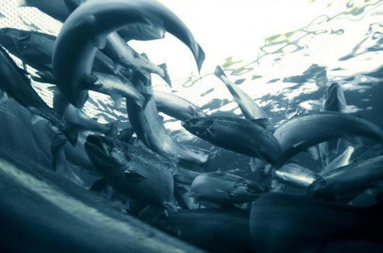 Крымчане получат льготы при разведении рыбы