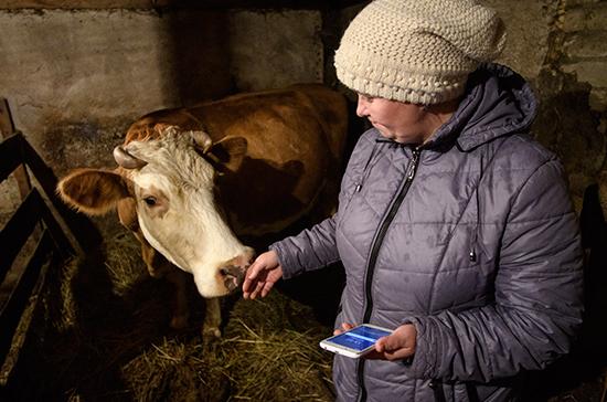 Доярок в малонаселённых деревнях подключат к Wi-Fi