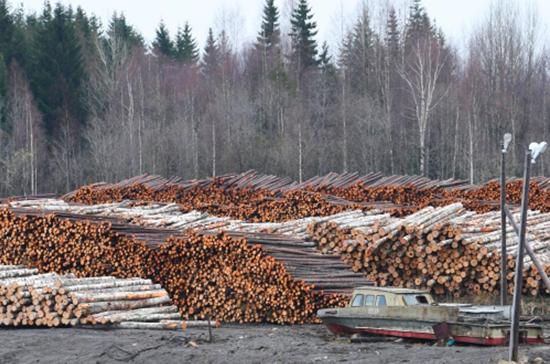 Чиновников начнут штрафовать за ложные сведения об обследовании лесов