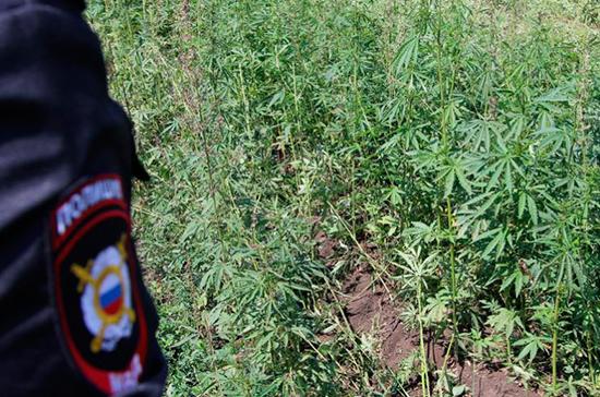ФАС поддержала законопроект о культивации наркосодержащих растений