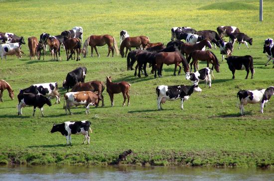 Маркировку животных в сельском хозяйстве планируют ввести до конца 2021 года