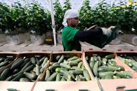 Президент поручил создать защищенный бренд отечественной «зеленой» продукции