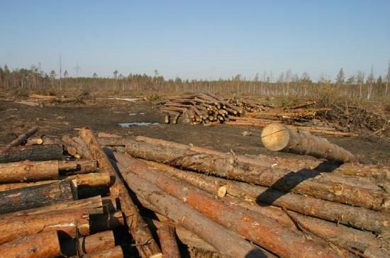 Минпромторг предложил усилить контроль за экспортерами необработанных лесоматериалов