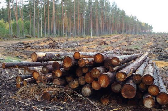 Депутаты предложили ограничить экспорт древесины до 2035 года