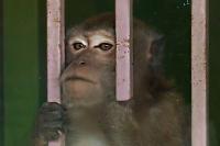 Жители Липецка помогут местному зоопарку приобрести экзотических животных