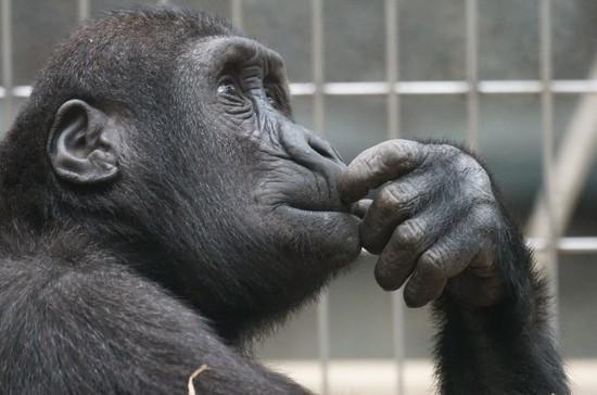 Зоопаркам могут упростить процедуры закупок